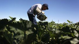 U.S. farmers want easier visas for Mexican workers
