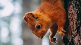 Drugged 'Attack Squirrel' Found During Meth Bust, Police Say