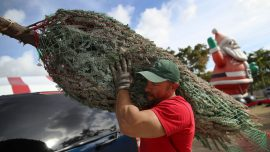 Shortage of Christmas Tree This Holiday