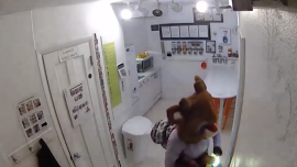 Police Search for Thief in Rudolph the Red-Nosed Reindeer Costume