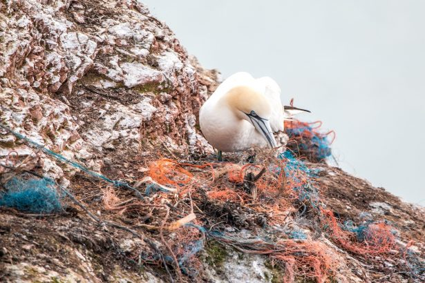 birds are eating plastic near the ocean