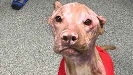$10,000 Reward for Information Leading to Arrest of Dog Attacker in Indiana