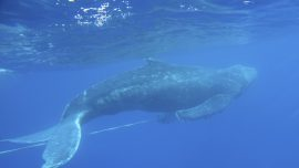 Whale Conservation Event on World Oceans Day