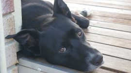 Bad Boy! Dog Costs Mississippi Officials More Than $7,000