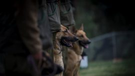 Austrian Army Says Soldier Mauled to Death by Service Dogs