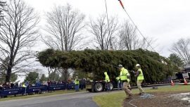 The Future Rockefeller Christmas Tree Was Cut Down, and It's on Its Way to Manhattan