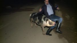 Pig Chases Greek Journalist Live On Air
