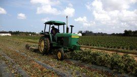 White Farmers Sue Over Race-Based Program
