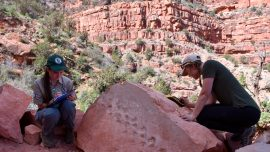 Rock Fall at Grand Canyon Reveals Possible Ancient Animal Footprints