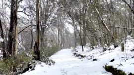 Antarctic Winds Trigger Rare Snowfall Across Southeast Australia