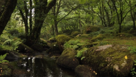 Nature and Solitude: Exploring the Moors