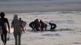 Australian Surfer Dies After Shark Attack at Popular Gold Coast Beach