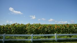 Is Now a Good Time to Invest in Farmland?