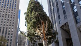 Rockefeller Center Christmas Tree Goes Up; Lighting Dec. 2