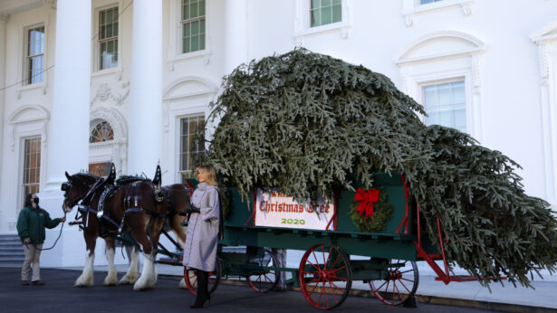U.S. first lady Melania Trump receives the 2020 White House Christmas Tree