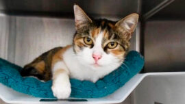Missing Cat Turns up 3 Years After California Disaster