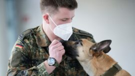 German Sniffer Dogs Detect COVID-19 With 94 Percent Accuracy
