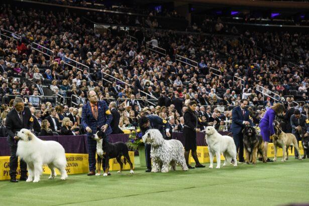 Kennel Club dog show