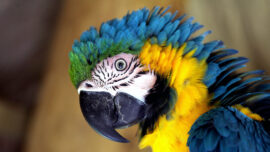 More Parrots Brought to Shelters Due to Pandemic