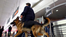 Dogs Sniff Out COVID-19 in Germany