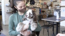 Dog Coffee Shop Celebrates National Puppy Day by Extending Hours