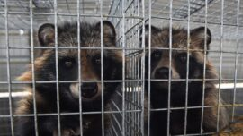 UK Urged to Ban Fur Imports From China