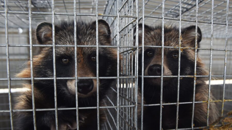 UK Urged to Ban Fur Imports From China