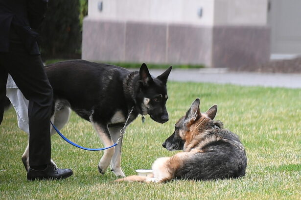Biden's dogs