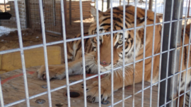 Federal Agents Seize 68 Animals From 'Tiger King Park'