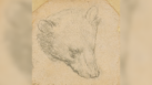 Da Vinci's 'Head of Bear' Drawing Seen Fetching up to $16 Million