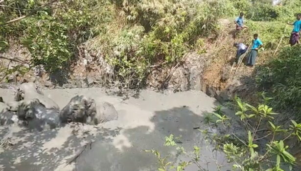 Villagers try to help an elephant herd
