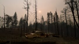 Wildfire Claims 10 Percent of the World's Sequoias