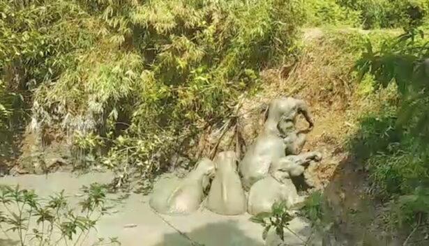 An elephant herd is seen stranded