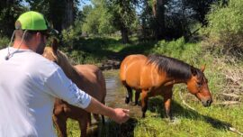 Montana Couple Rescues Horse From Drowning in River