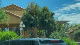 Bee Swarm Attack Kills Arizona Man and Injures Five People
