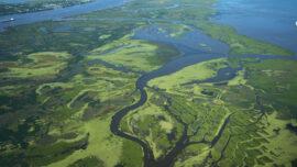 NASA Studies Mississippi River Delta