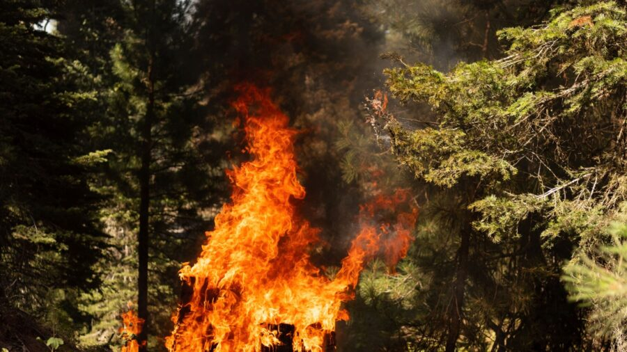 Lightning Found to Have Ignited Oregon's Mammoth Bootleg Fire