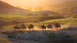Heat Wave Starves Horses on Kazakh Steppe