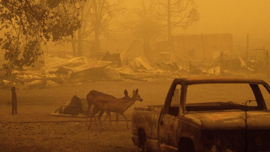 US Faces Intense Heat Wave as Wildfires Ravage West Coast