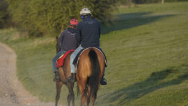Racehorse Week: Insight Into a Horse's Life