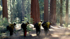 Firefighters Protect California Sequoia Groves