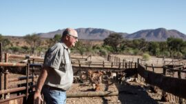Namibia Detects a New Strain of Foot-and-Mouth Disease