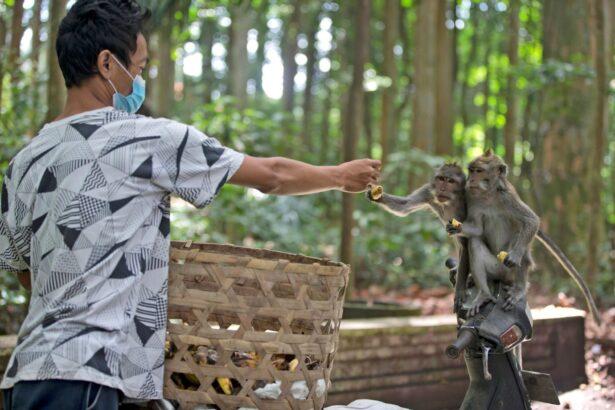 man-feeds-monkeys
