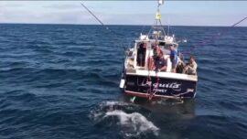 Atlantic Bluefin Tuna Return to UK Waters