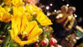 Philadelphia Flower Show Goes Outdoors