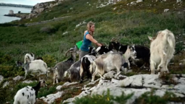 Grazing Goats Help Protect Against Wildfires