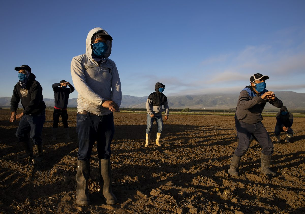 california workers Farm laborers