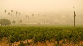 Study Links Excess COVID-19 Cases and Deaths to Wildfire Smoke