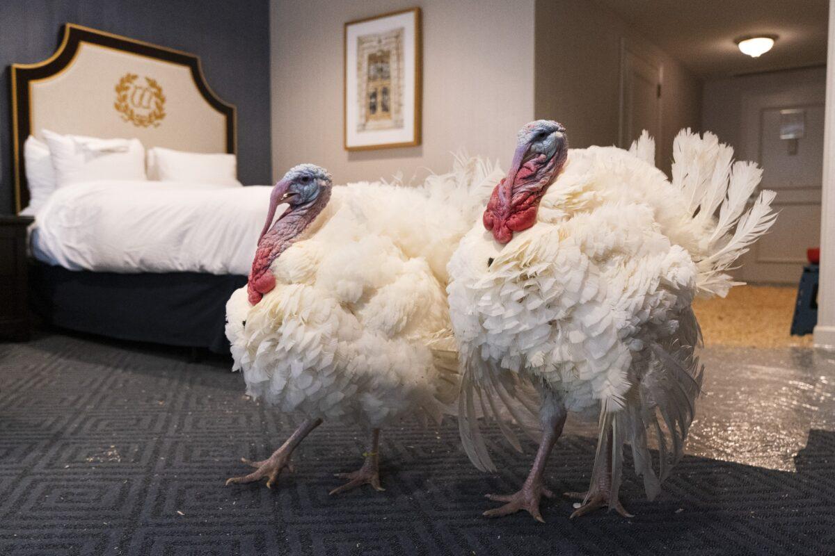 White House Turkey